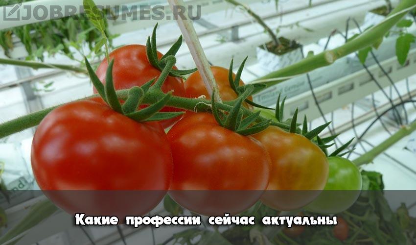 Органической фермы.