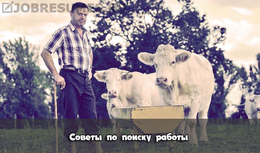Фермер во время осмотра скота.